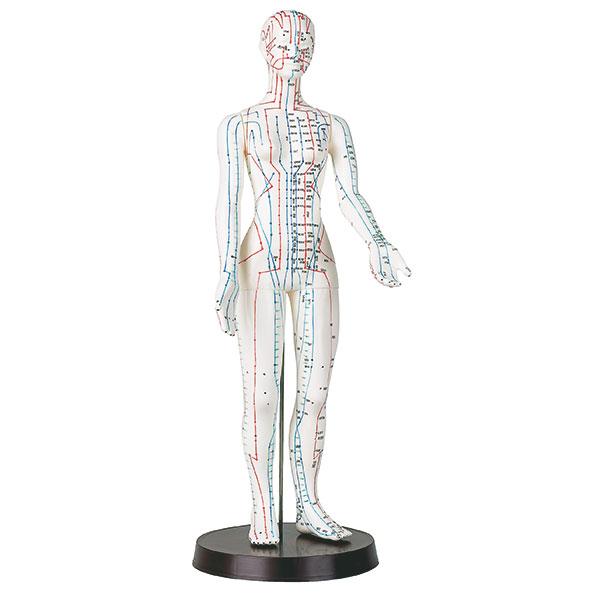 Akupunkturmodell aus Kunststoff